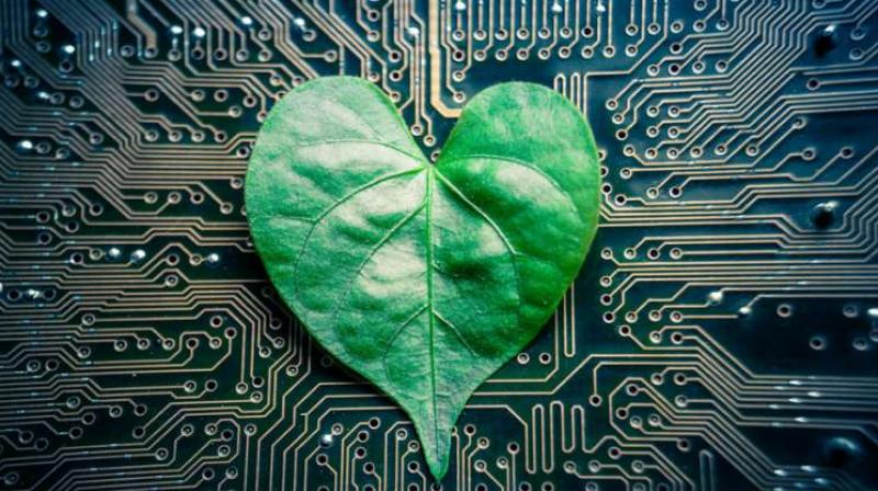 Tree on a chip could lead to sugar-powered robots