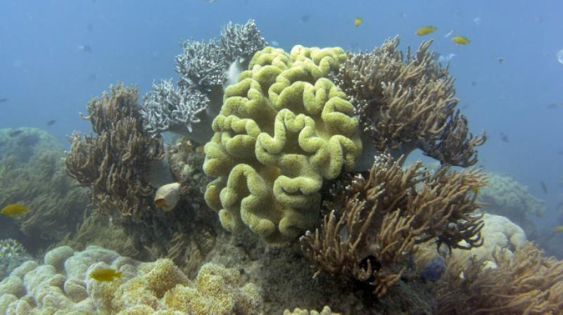 Australia's Great Barrier Reef, which scientists say may never recover from warming-driven coral bleaching last year