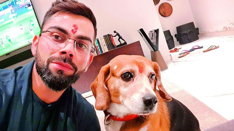 Cricketer Virat Kohli enjoys spending time with Bruno. He says that he loves being lazy at home with his dog