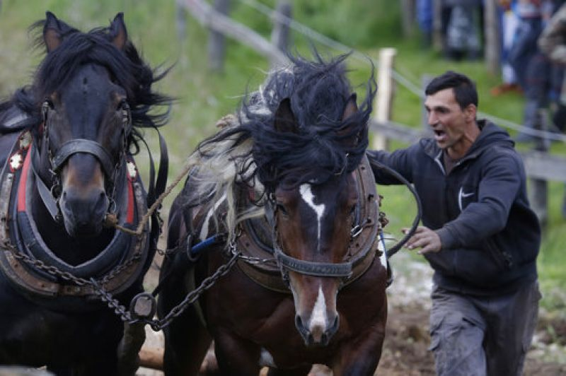 A Bosnian man urges his horses to pull logs up a hill during a competition in the town of Sokolac, Bosnia, on Sunday, June 18, 2017.  (Photo: AP)