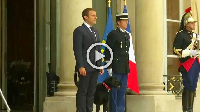 INSIGHT: Macron's dog pees in Elysee meeting