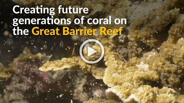 Great Barrief Reef springs to life with annual spawning