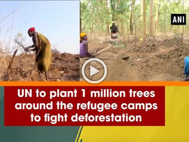UN to plant 1 million trees around the refugee camps to fight deforestation