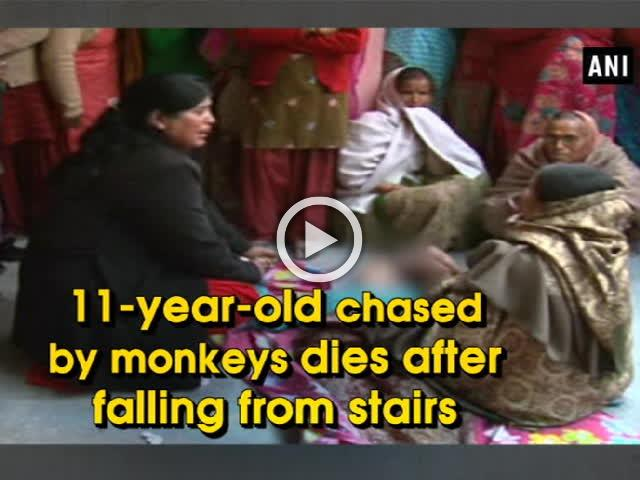 11-year-old chased by monkeys dies after falling from stairs